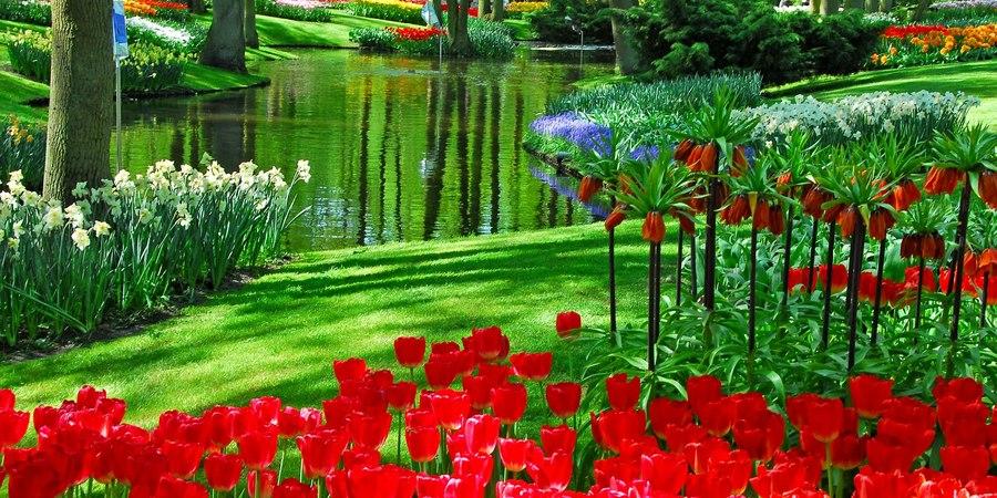 Всемирно известный королевский парк цветов Кёкенхоф